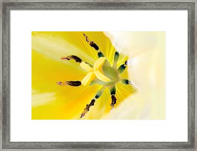 Yellow Tulip Framed Print by Tommytechno Sweden