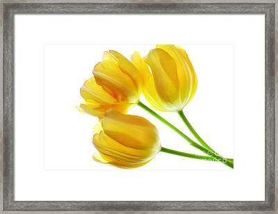 Yellow Tulips Framed Print by Charline Xia