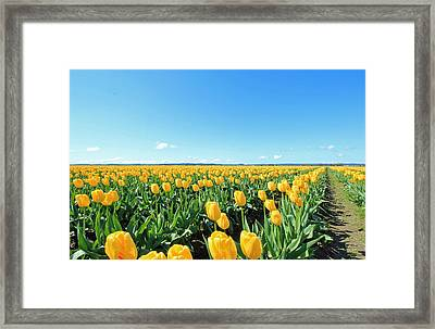 Framed Print featuring the photograph Yellow Tulips by E Faithe Lester
