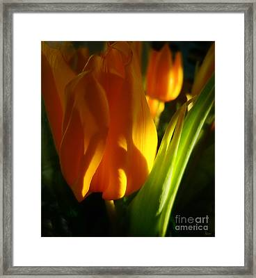 Yellow Tulips Framed Print by Jeff Breiman