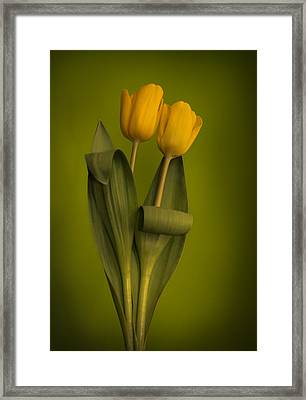 Yellow Tulips On A Green Background Framed Print by Eva Kondzialkiewicz