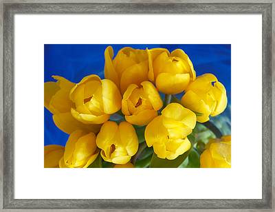 Framed Print featuring the photograph Yellow Tulips by Patricia Schaefer