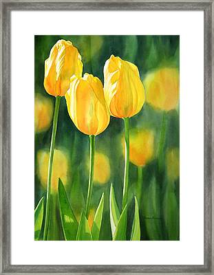 Yellow Tulips Framed Print by Sharon Freeman