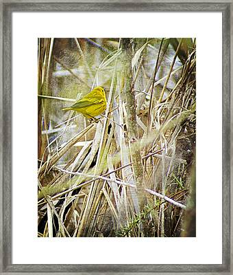 Yellow Warbler - Paint Framed Print