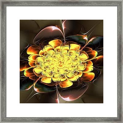 Yellow Water Lily Framed Print by Anastasiya Malakhova