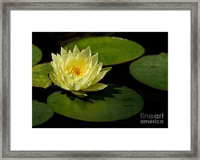 Yellow Water Lily Sitting Pretty Framed Print by Sabrina L Ryan