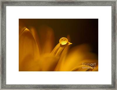 Yellow Framed Print by Wendy Riley- Athans