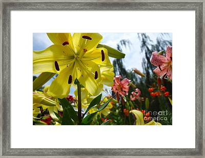 Yellow Whopper Lily 1 Framed Print