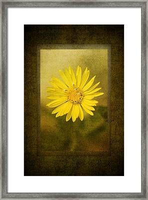 Yellow Wildflower Framed Print