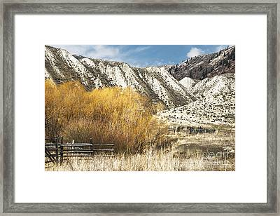 Yellow Willow Framed Print by Sandi Mikuse