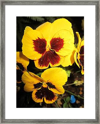 Yellow Wings Framed Print by Mike Podhorzer