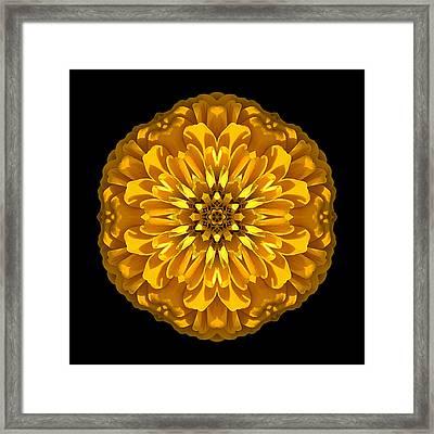 Yellow Zinnia Elegans Flower Mandala Framed Print