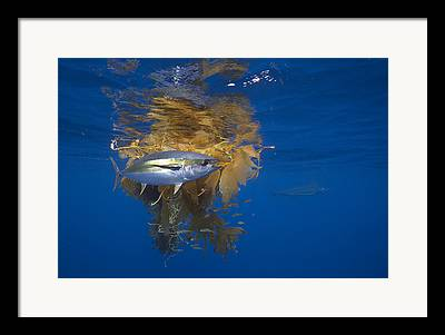 Indo-pacific Framed Prints