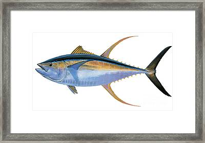 Yellowfin Tuna Framed Print by Carey Chen