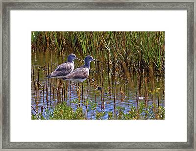 Framed Print featuring the photograph Yellowlegs Of Texas by Gary Holmes