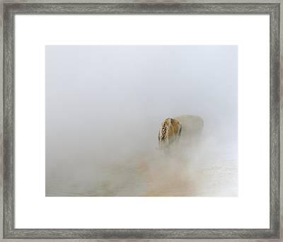 Yellowstone Bison Framed Print