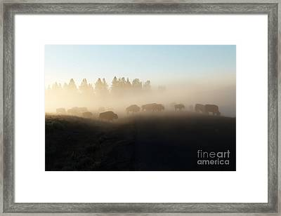 Yellowstone Bison In Early Morning Fog Framed Print by Bob and Nancy Kendrick