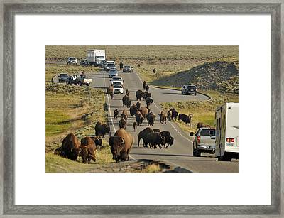 Yellowstone Bison Jam Framed Print