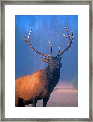 Framed Print featuring the photograph Yellowstone Bull Elk by Dennis Cox WorldViews