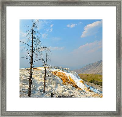 Yellowstone Canary Spring Framed Print