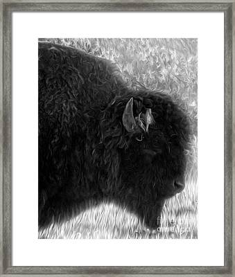Yellowstone National Park Bison - 02 Framed Print by Gregory Dyer
