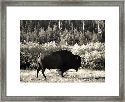Yellowstone National Park Bison Framed Print by Gregory Dyer