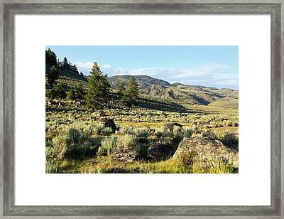 Yellowstone Scenery Framed Print by Sophie Vigneault