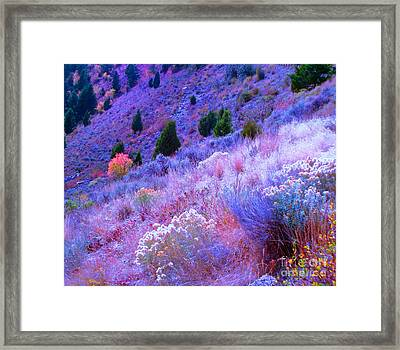 Yellowstone Summer Framed Print by Ann Johndro-Collins