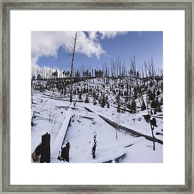 Yellowstone Winter Framed Print by David Yack
