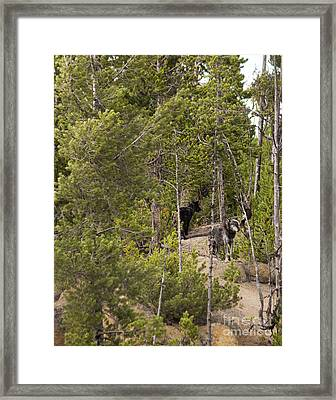 Yellowstone Wolves Framed Print by Belinda Greb
