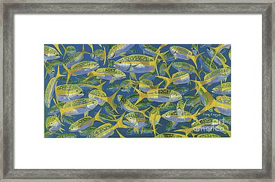 Yellowtail Frenzy In0023 Framed Print by Carey Chen