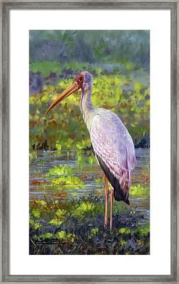Yelow-billed Stork Framed Print by David Stribbling
