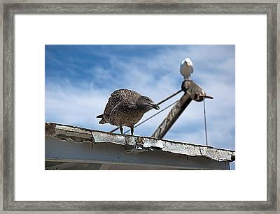 Yes Dear. Whatever You Say Dear. Framed Print by Bob Wall