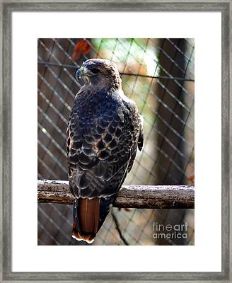 Yes I See You Framed Print by Eva Thomas
