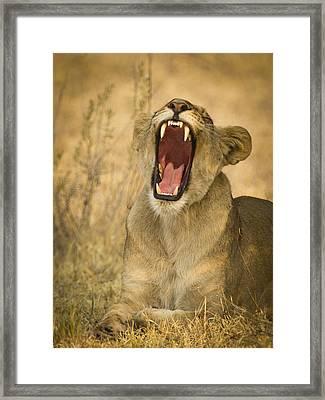 Yes Mom I Brushed My Teeth Framed Print by Alison Buttigieg