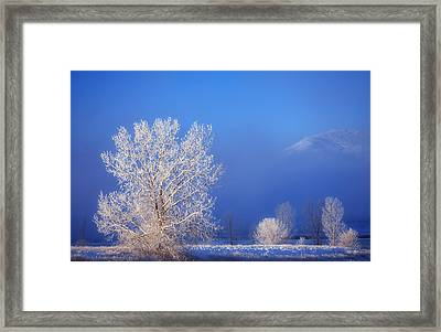 Yesterday's Blues Framed Print by Darren  White