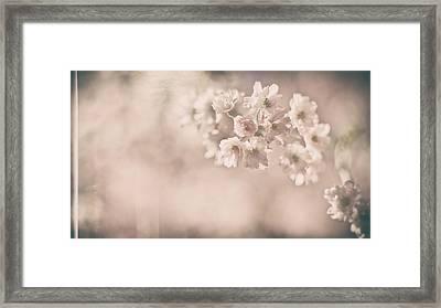 Yesterdays Sunshine Framed Print