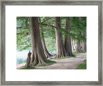 Yesterday's Trees Framed Print by Wendy J St Christopher