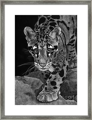 Yim - The Clouded Leopard Framed Print