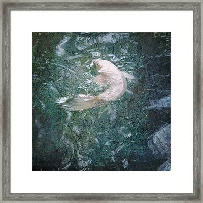 Framed Print featuring the photograph Yin In Pink by Sally Banfill