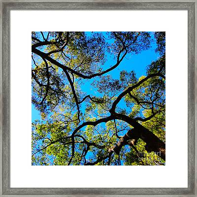 Yin Yang Midpoints Framed Print