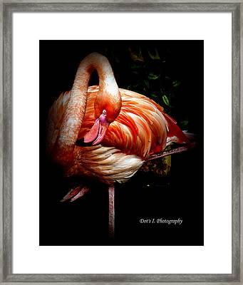 Yoga Flamingo Framed Print by Dorothy Hilde