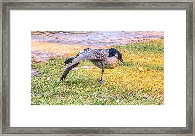 Yoga Goose Framed Print by Rob Sellers