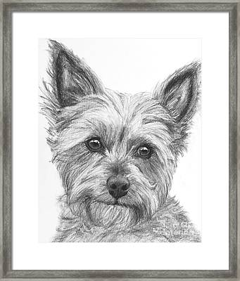 Yorkie Drawing Framed Print by Kate Sumners