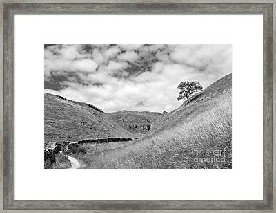 Lone Tree In The Yorkshire Dales Framed Print