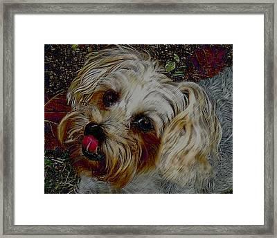 Yorkshire Terrier Artwork Framed Print by Lesa Fine