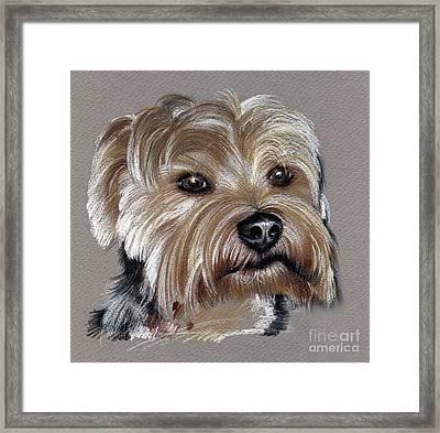 Yorkshire Terrier- Drawing Framed Print