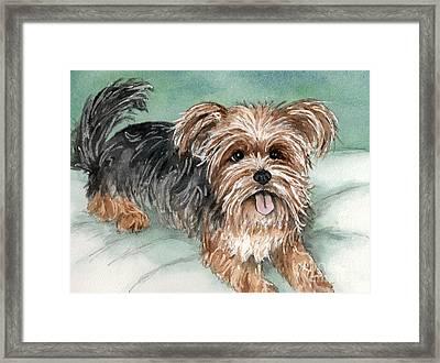Yorkshire Terrier On Bed Framed Print