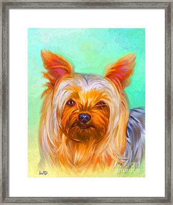 Yorkshire Terrier Painting Framed Print by Iain McDonald