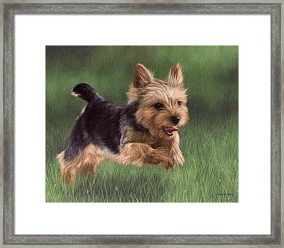 Yorkshire Terrier Painting Framed Print by Rachel Stribbling